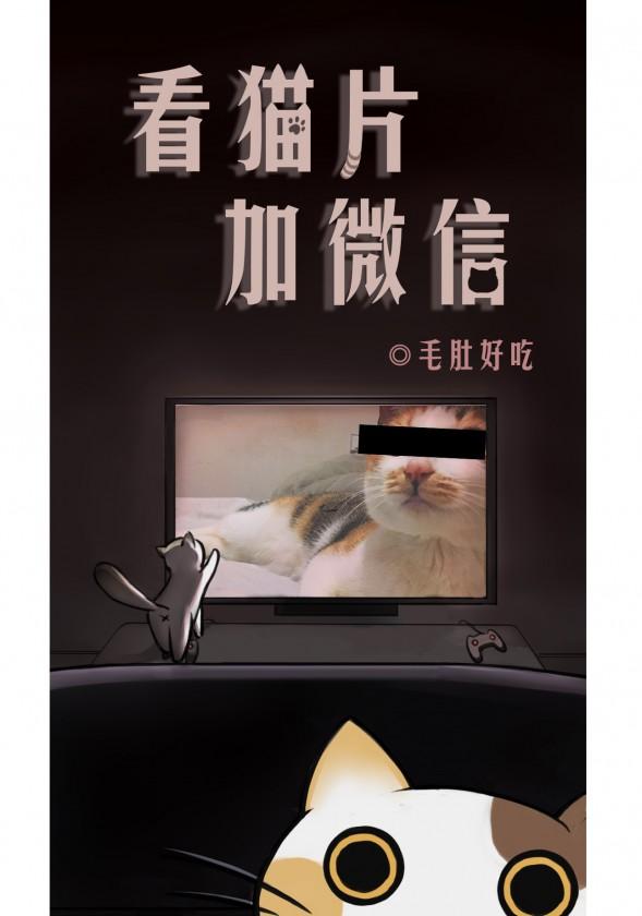 看猫片加微信