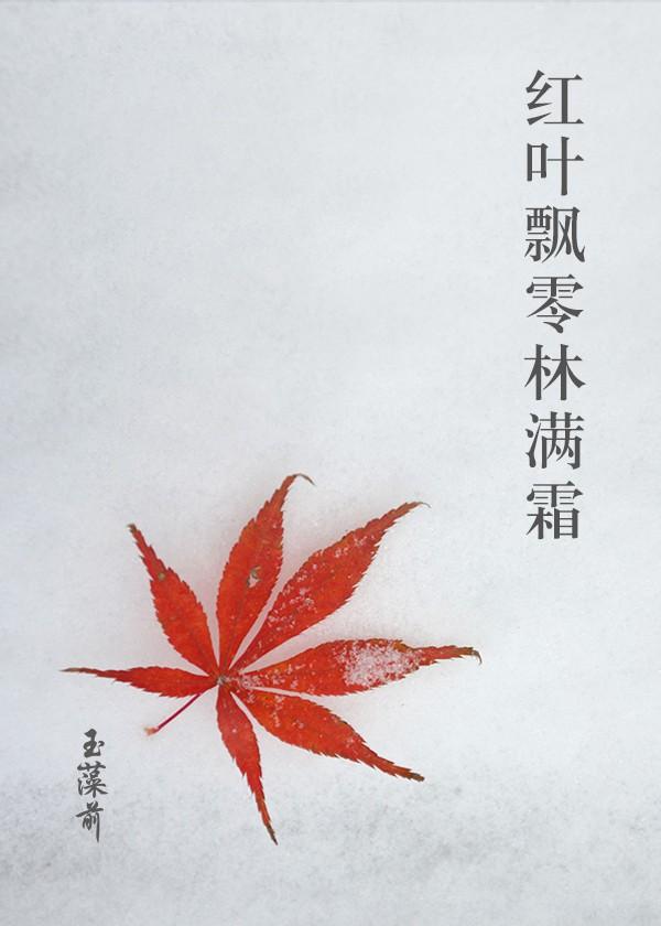 红叶飘零林满霜